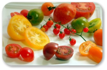 トマトの種類とおすすめ品種 選んで美味しい、とまとまトマト