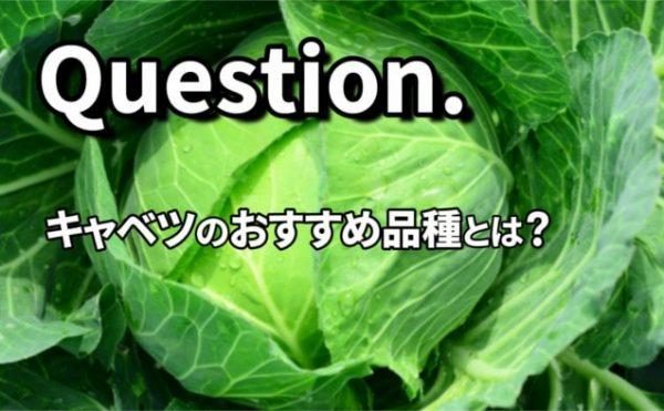 キャベツのおすすめ品種とは?
